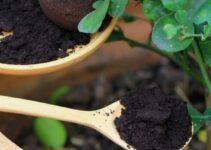 Do Coffee Grounds Help Houseplant?